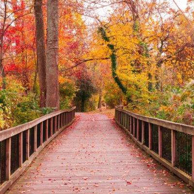 A Bridge Called Thankfulness